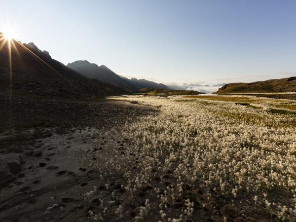 Laghetto di Ercavallo 2.710m - D18 104